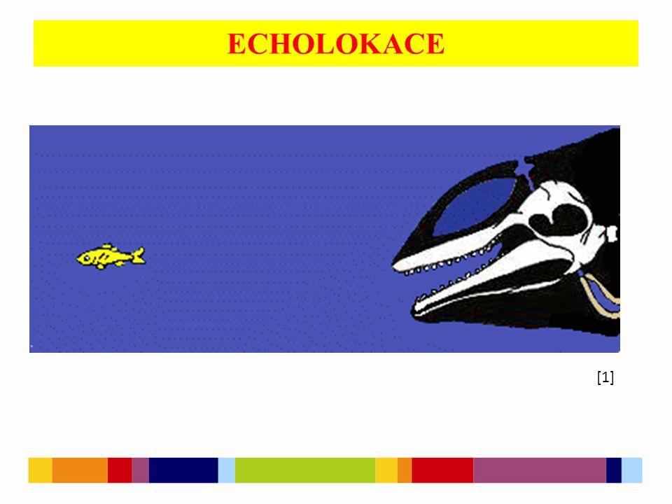 ECHOLOKACE [1]